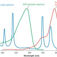 FIG 1. The peaks of the mercury spectrum align well with the excitation of Texas Red, which accounts for the fluorophore's popularity.