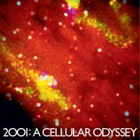 2001 : A Cellular Odyssey