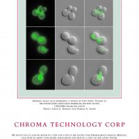 Chroma Technology Corp - Budding Yeast